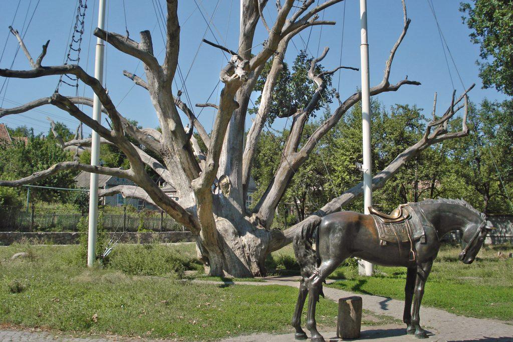 Old Oak Tree at Chortiza